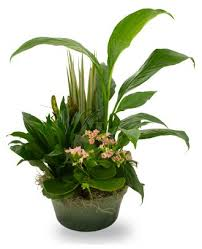 funeral plants flowerwyz cheap funeral plants plants for funerals popular