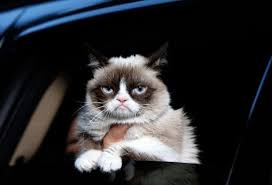 Grumpy Cat Has Died Youtube - grumpy cat how a reddit and youtube star earned its owners 100m in