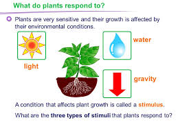 light and plant growth plant responses what do plants respond to response to light ppt