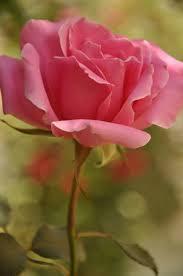 424 best flowers images on pinterest beautiful flowers flowers