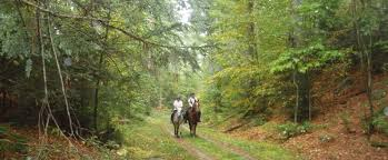 Massachusetts how far can a horse travel in a day images Bay state trail riders association jpg