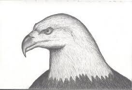 eagle drawing by suburbandevil on deviantart