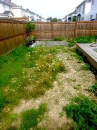 low maintenance backyard green grass landscaping