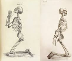 He Made Accurate Drawings Of The Human Anatomy Accuracy And Elegance In Cheselden U0027s Osteographia 1733 The