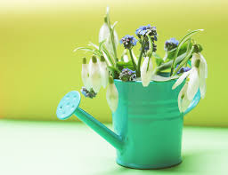 free images white bloom cup vase decoration green color