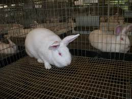 Large Bunny Cage Rabbit Cage And Nest Information Cross Roads Rabbitry