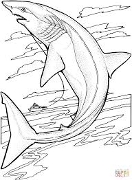 realistic great white shark coloring pages youtuf com