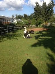 savannah save a forgotten equine safe