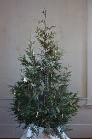 live christmas trees for sale diy plant your christmas tree in the garden gardenista