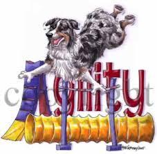 australian shepherd agility agility jump