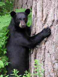 New Hampshire wildlife tours images 42 best new england wildlife images wildlife maine jpg