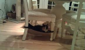 Cat Under Chair Great Photo Of Cat Crib On Dining Room Chair U2014 Catcrib Com