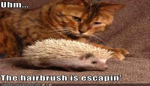 Hedgehog Meme - i can has cheezburger hedgehog funny animals online cheezburger