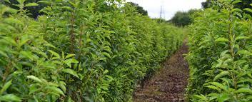 native hedging plants uk home