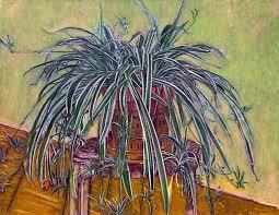 9 my spider plant alegriamaronvanrooy com