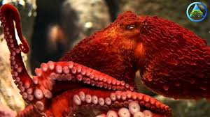 octopus genetic code is so strange it could be an alien according
