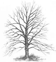 realistic oak tree drawings drawing nature joshua nava arts