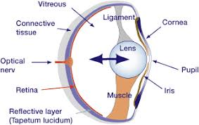 Anatomy Of A Cats Eye Auge En Gif