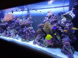 awesome cichlid tank decorations for fish african cichlids idolza