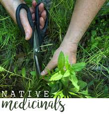 native and adapted landscape plants native medicinal plants nectar apothecary