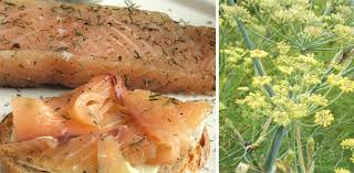 cuisine sauvage recettes saumon mariné au fenouil sauvage façon gravlax cuisine cagne