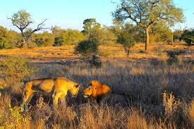 the complete guide where to go on safari in south africa world