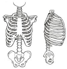 balancing the rib to pelvis cylinder an article for pilates
