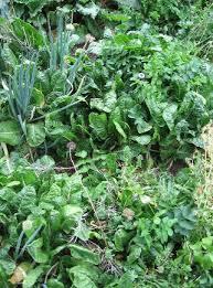 no fuss vegetable gardening green life tips