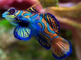 elegant reef san antonio u0027s newest tropical fish store