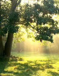 backlit trees at todd lake 2 one writer s way