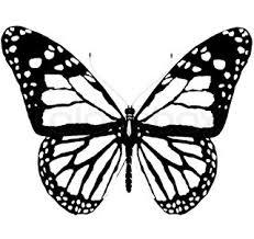 60 best tatuajes images on butterfly images blue