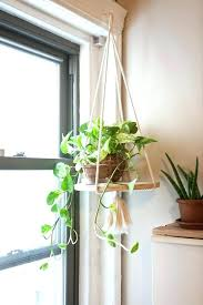 best indoor house plants best house plant most best house plant indoor plants gardens and