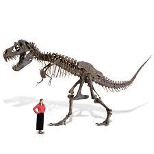 the life size tyrannosaurus skeleton hammacher schlemmer