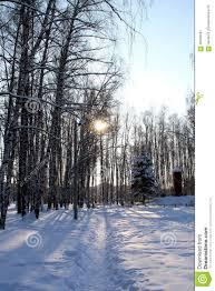 winter landscape with birch trees stock photo image 66049187