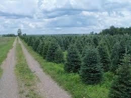 wholesale trees high ground tree farm
