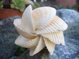 134 best shell crafts images on pinterest beach crafts shells