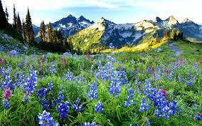 Beautiful Plants by Fields Beautiful Delicate Mountain Flowers Beauty Petals Lovely