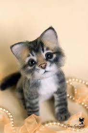 best 25 white fluffy kittens ideas on pinterest cute kitty cats