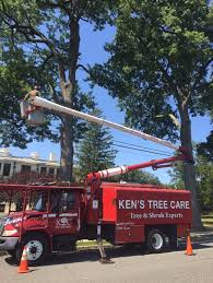 tree pruning tree service and shrub experts northvale nj kens