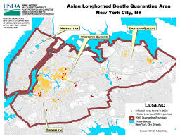 Queens Ny Map Asian Longhorned Beetle U003e Usda Hires New York City Infestation Map
