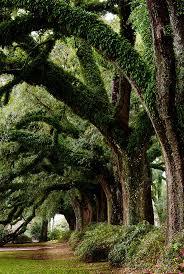 88 best trees u0026 tree art images on pinterest tree art nature