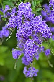 beauteous 10 common purple garden flowers design ideas of top 10
