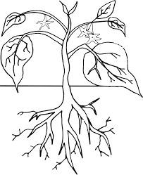 plant life cycle clipart worksheet u0026 coloring page coloring home