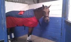 equine case study massage and pulsed electro magnetic field