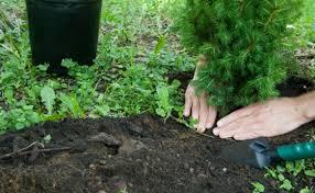 albero giardino come piantare un albero nel giardino i trucchi e i segreti per