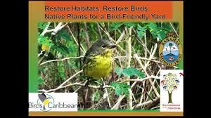 bird friendly native plants audubon native plants for a bird friendly yard youtube