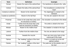 human anatomy free anatomy directional terms sample detail ideas