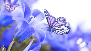 butterfly flower flowers simply flowers butterfly blue butterflies beautiful