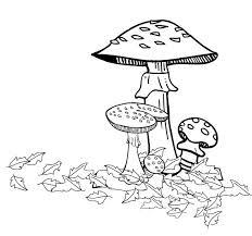 61 mushroom images mushrooms drawings
