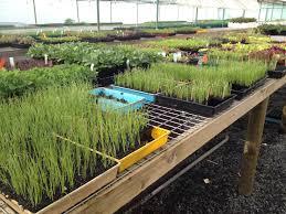 native plant nursery victoria edible plants nursery u2013 yarra valley ecoss